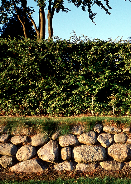 Torsted Kirkegård – Omsætning af stendige